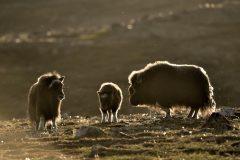 Groenland 2014_0997_BTD0178