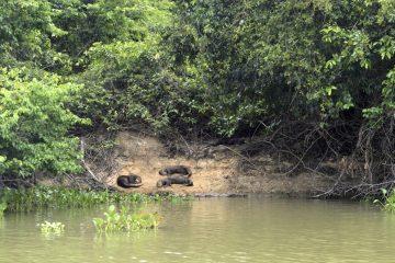 Pantanal-2018_0080_BOF4165