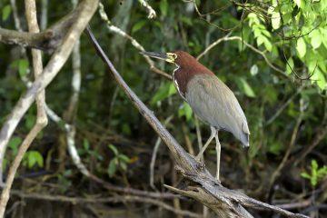 Pantanal-2018_0100_BOF4237