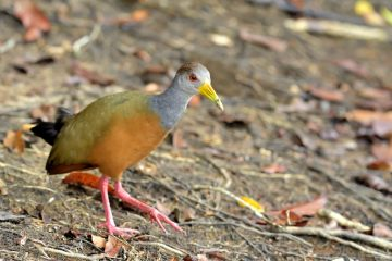 Pantanal-2018_0103_BOF4245
