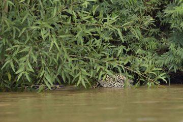 Pantanal-2018_0269_BOF5139