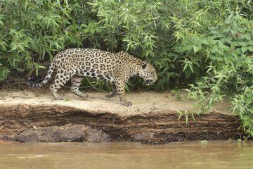Pantanal-2018_0282_BOF5252