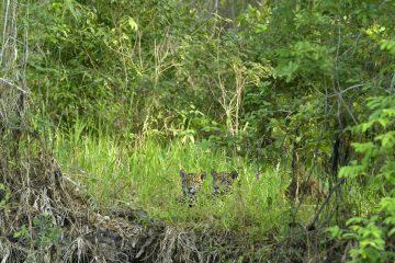 Pantanal-2018_0370_BOF5568