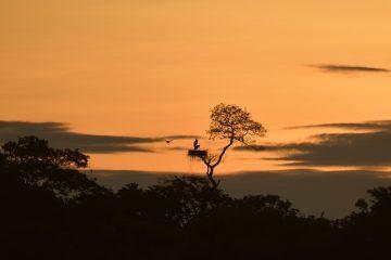 Pantanal-2018_0422_LVZ5915