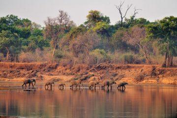 Zambie-2019_0918KAB_3567