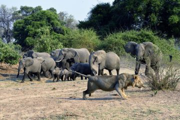Zambie-2019_1276_BLV1642
